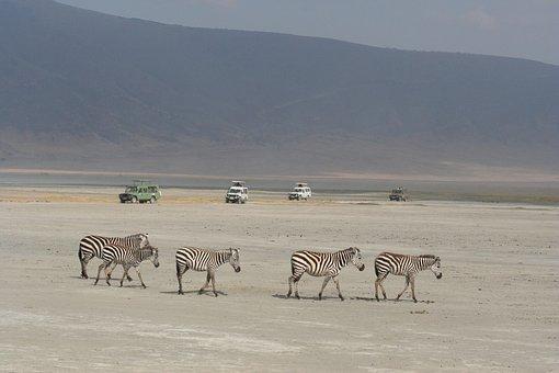 zebra-5173903__340