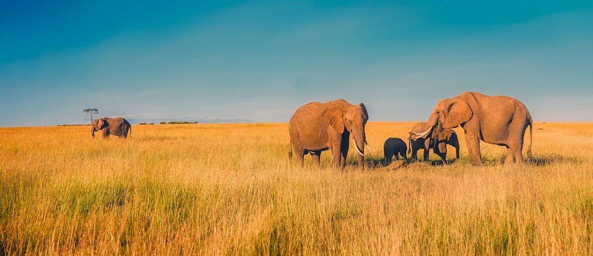 Afrique tourisme